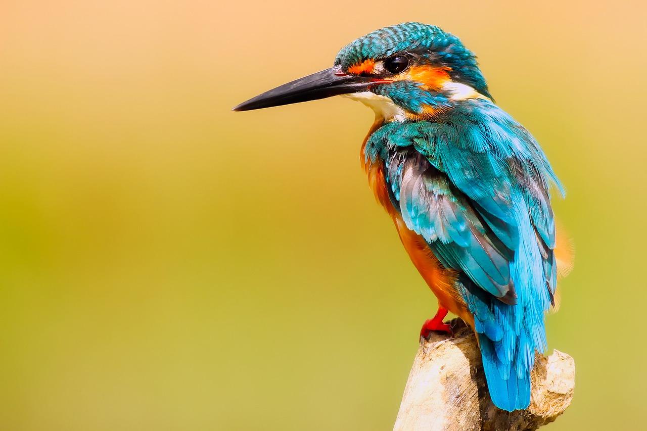 Fotografia przyrody – jaki obiektyw do fotografowania ptaków. Kurs fotografii Leszno
